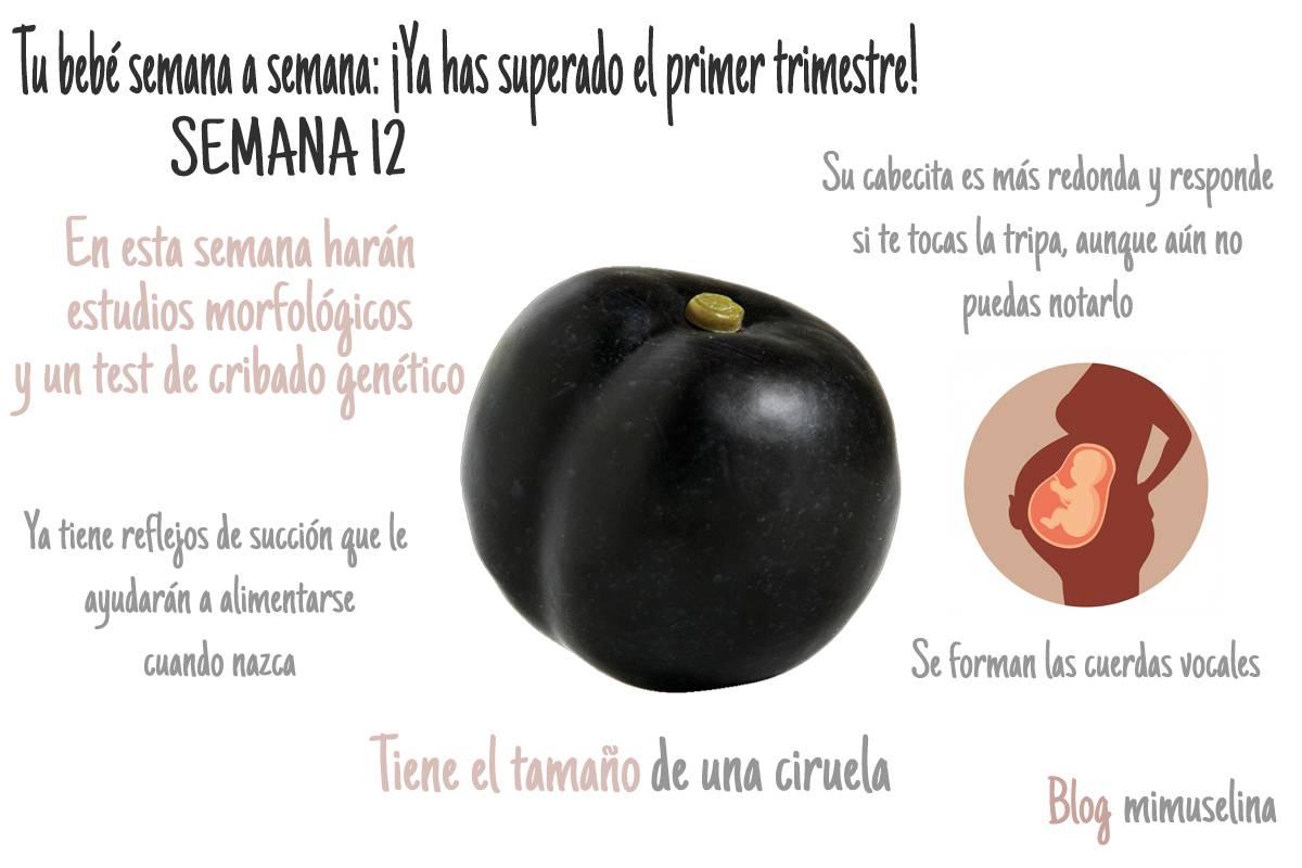 semana 12 embarazo semana a semana tamaño frutas feto como una ciruela