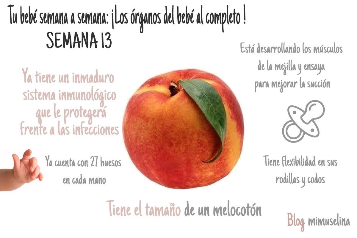 semana 13 de embarazo blog mimuselina tamaño del feto como un melocotón