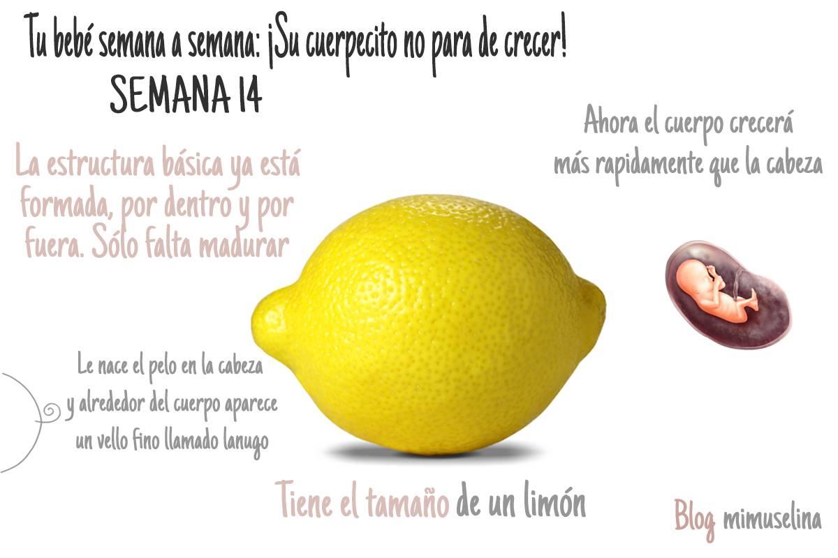 semana 14 del embarazo semana a semana frutas blog mimuselina
