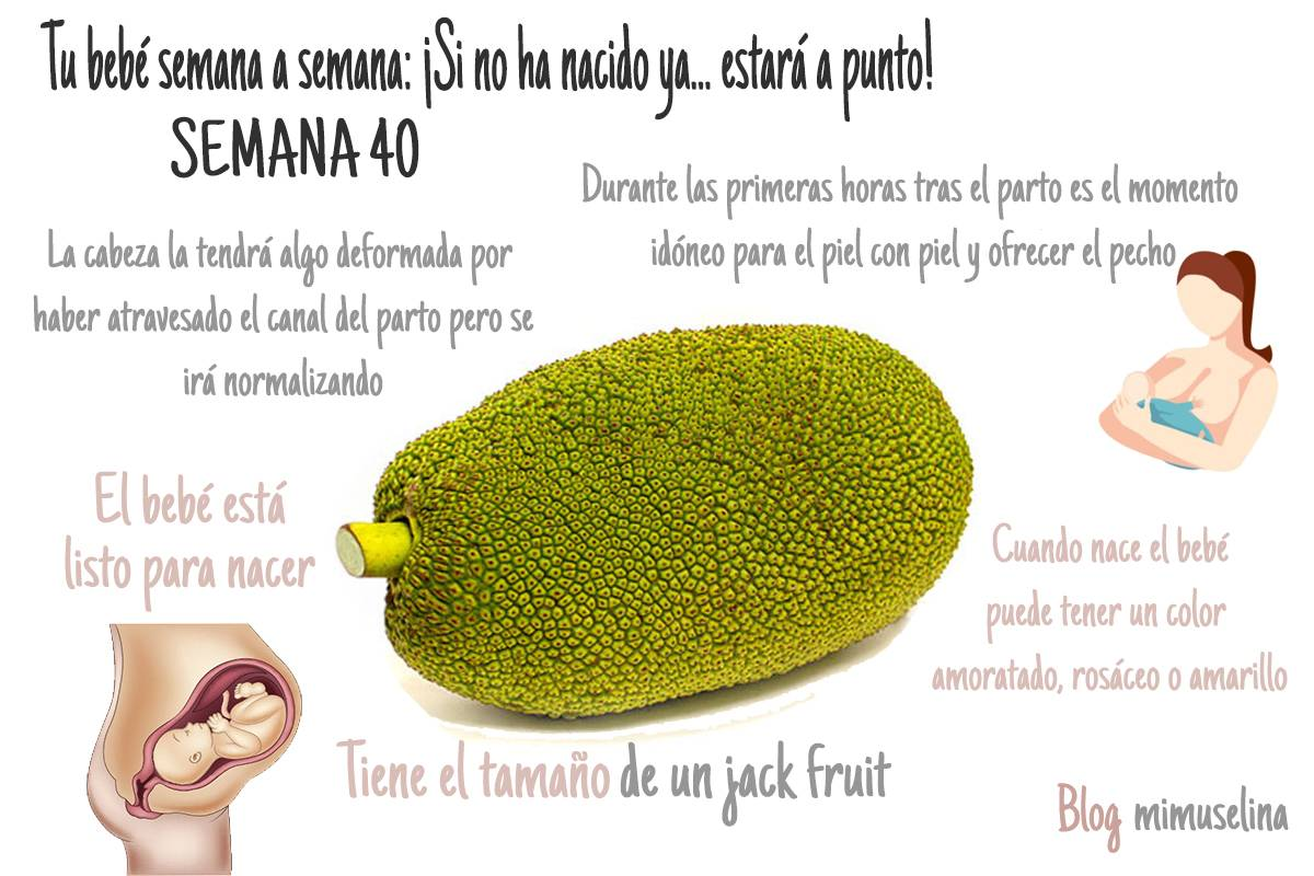 Semana 40 de embarazo blog mimuselina