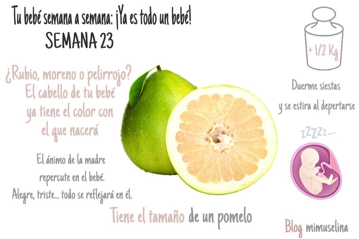 semana 23 de embarazo blog mimuselina semana a semana