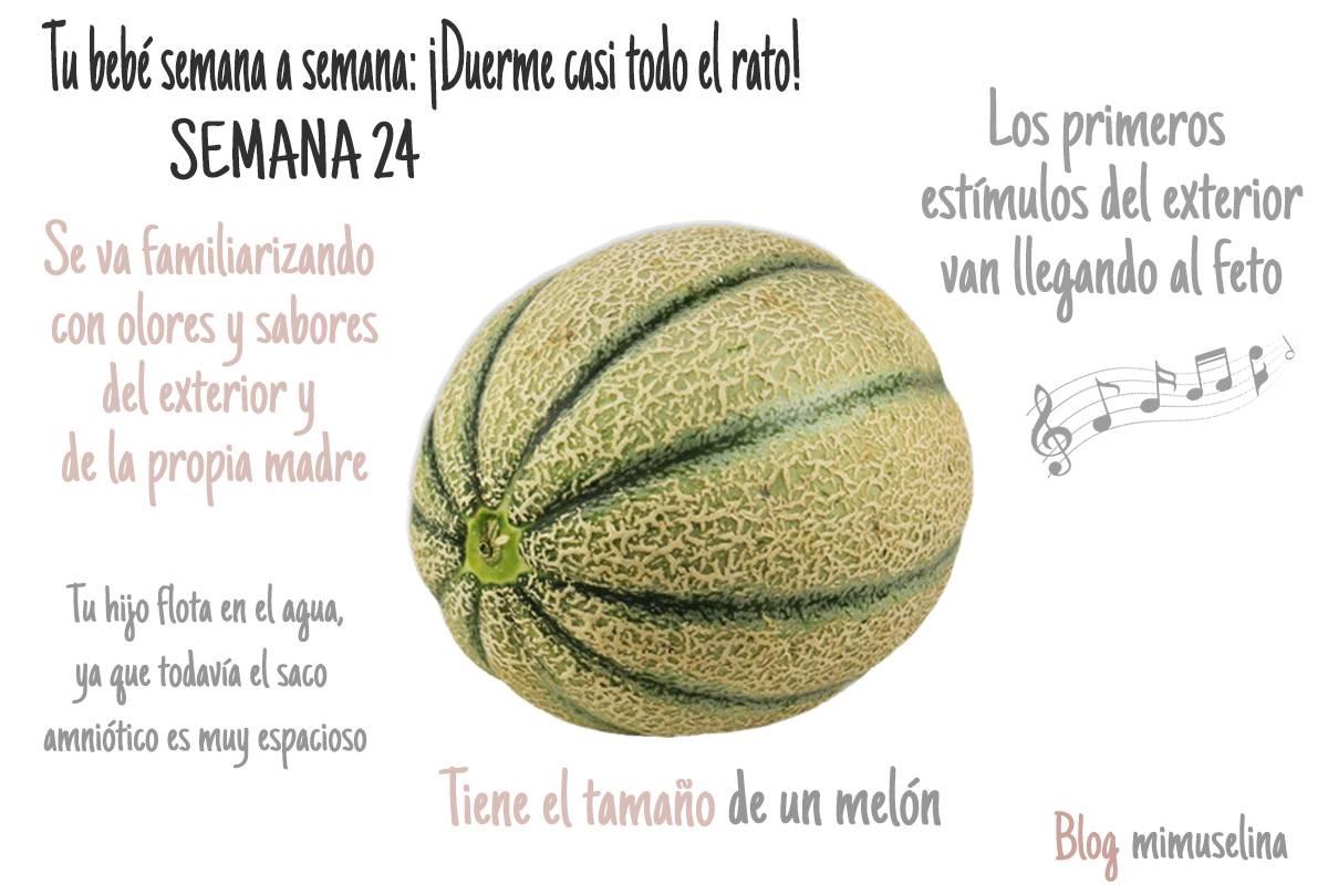 Semana 24 de embarazo blog mimuselina feto tamaño melón