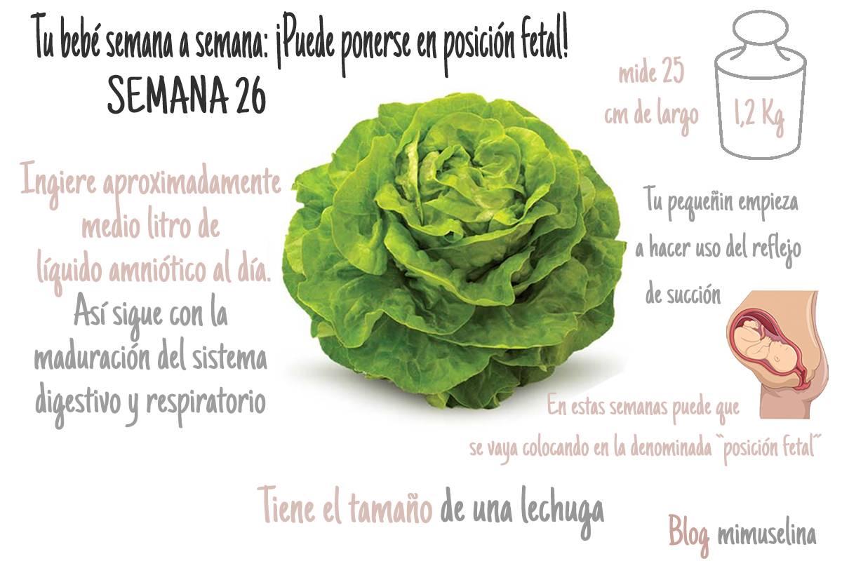 Semana 26 de embarazo feto como una lechuga mimuselina