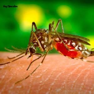 mosquitos y bebés como evitar que le piquen y como actuar si ya le han picado mimuselina