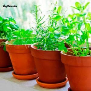 Plantas evitar picaduras de mosquitos mimuselina